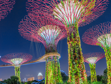 "Supertrees at the ""Gardens by the Bay"" with changing colourful lights at night"